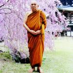 ทรงพระรูปใต้ต้นซากุระคราวเสด็จเป็นองค์ประธานในการประชุมชาวพุทธโลกเพื่อการเผยแผ่ครั้งที่ ๑ The First World Buddhist Propagation Conference วันที่ ๔-๑๐ เมษายน ๒๕๔๑ ณ เมืองเกียวโต ประเทศญี่ปุ่น